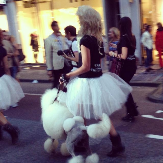 Poodles e Frou-fruos em desfile